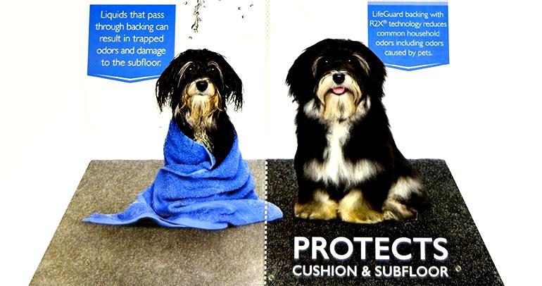 Shaw Life Guard Carpet